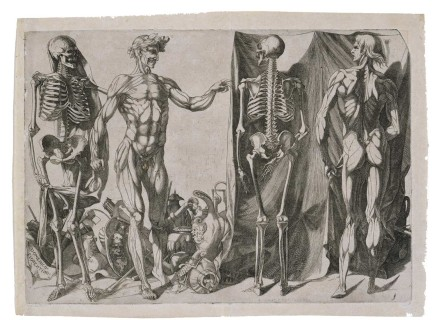 Skeletons and écorchés