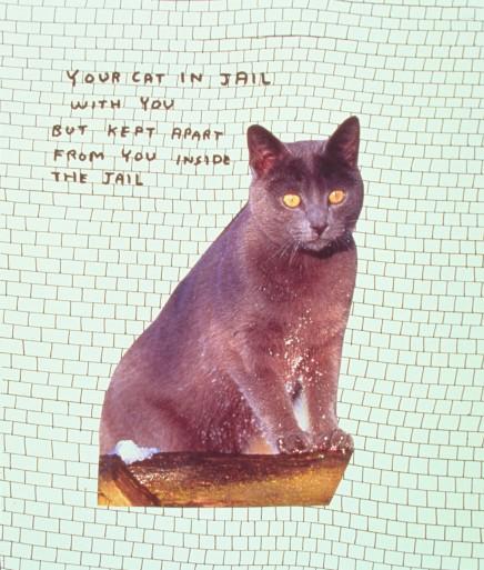 Ucla Cat Cafe