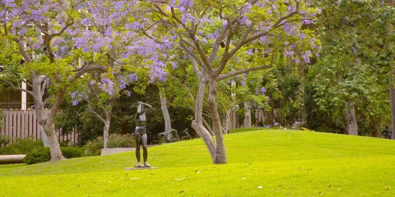 A large grassy area with trees in the middle ground blooming with purple flowers, and a single bronze sculpture of a nude woman standing on the grass in the middle ground, and another abstract sculpture in the background. More trees are in the background, and appear to obscure buildings.