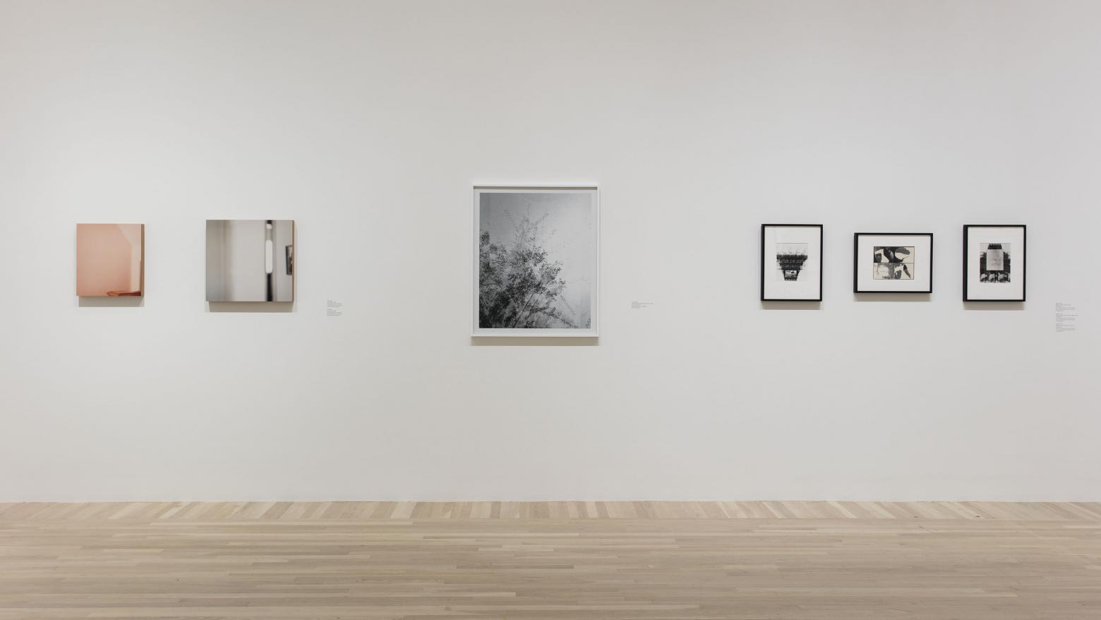 Still Life with Fish: Photography from the Collection, installation view, Hammer Museum, Los Angeles, February 13-May 15, 2016. Photo: Brian Forrest.