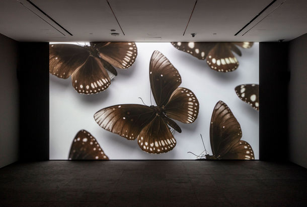 A screening room with a large image of butterflies on pins