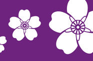 A purple rectangle with three white flowers on it