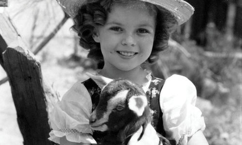 Black-and-white photo of a young Shirley Temple, standing outside wearing a hat and holding a baby goat.