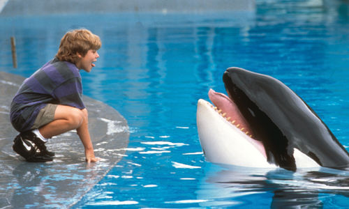 A boy squats and sticks out his tongue next to a pool of water where a killer whale lifts its head up, with mouth open and tongue sticking out.